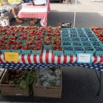Strawberries & Blueberries today